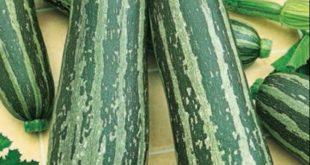 Кабачки Куанд: описание сорта с фото, отзывы овощеводов