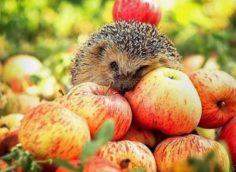 Яблочный спас 2020: какого числа, история, традиции и приметы