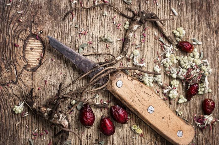 Корень шиповника полезные свойства и противопоказания: рецепты